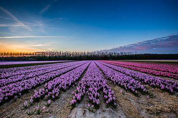 Blumenfeld am Abend von Kevin Baarda