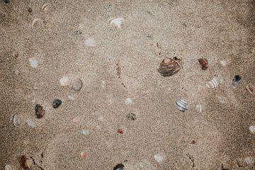 Een zee van schelpen | Zandvoort | Natuurfotografie Nederland van Trix Leeflang
