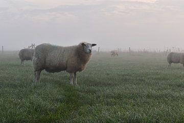 Schafe im Nebel von Shutterbalance