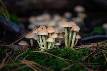 groupe de champignons sur Tania Perneel