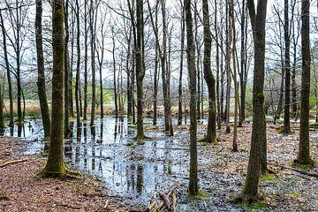 Drassig boslandschap boswachterij Schoonloo