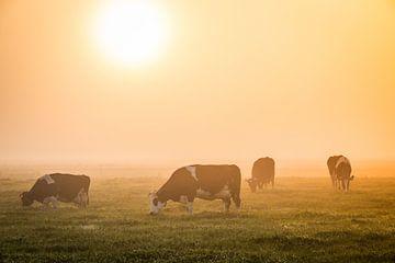 Fries landschap met koeien van Jo Pixel