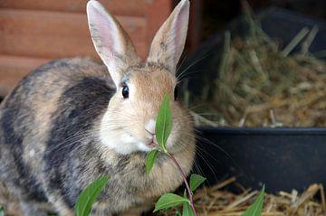 Bruin konijn eet een tak met bladeren van cuhle-fotos