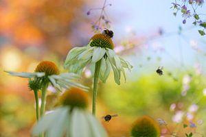 Bloemetjes en bijtjes van