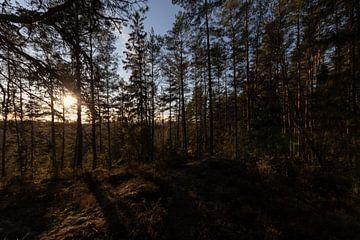 Bos midden in Zweden van Fabio Holkema