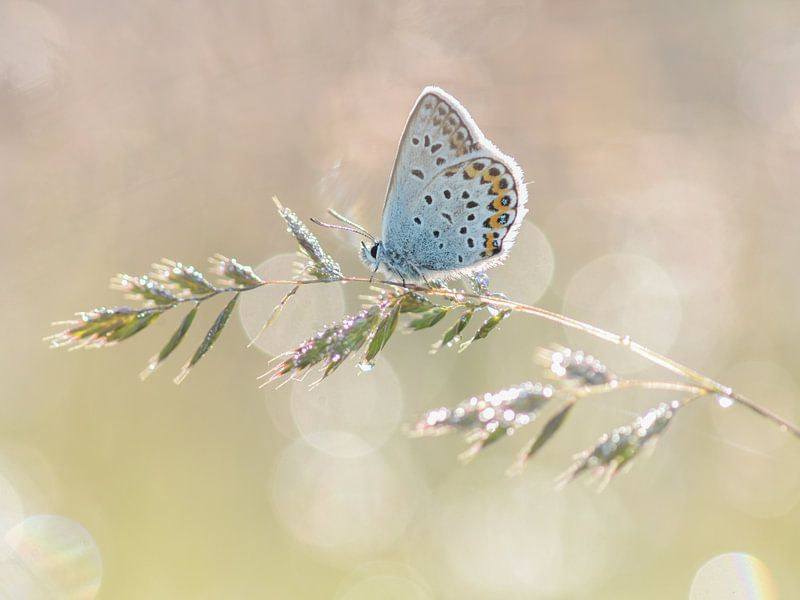 Vlinder van Elles Rijsdijk