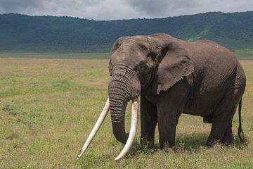 Großer Elefant von Menno Selles