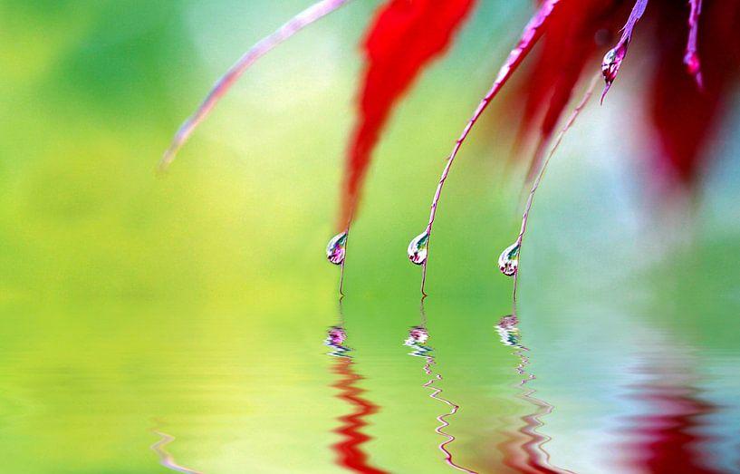 Regentropfen van Renate Knapp