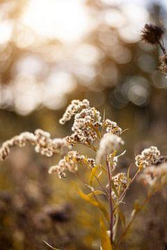 herfst bloemen van Yara Verstappen