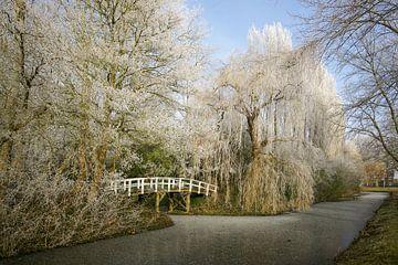 Rijp op de bomen in een  winters landschap  von Alice Berkien-van Mil
