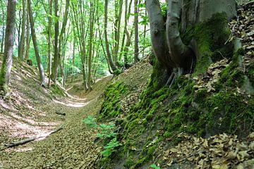 Frühlingswald von Marieke Funke