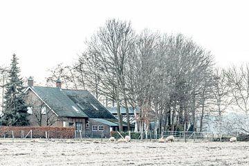 Bauernhof zwischen Roosendaal und Nispen (Brabant) von Fotografie Jeronimo