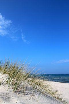 Gevoelige grassen van Ostsee Bilder