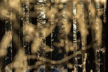 Magisch ochtendlicht valt door de bomen heen. van Mindy Molein
