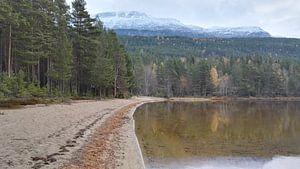 Taigabos in Noorwegen van