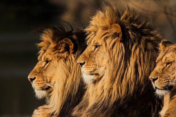 De Leeuwenkoning van Ron van Zoomeren