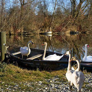 Swan Lake -  de reis van