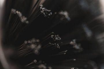 Abstrakte Geschirrspülbürste Nahaufnahme von Nathan Okkerse