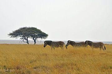 Zebras in Bewegung im Etoscha-Nationalpark von Renzo de Jonge