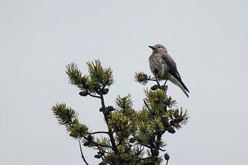 Vogel op de top van de boom van Kimberley Helmendag