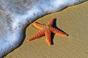 Close-up van zeester liggend op het strand