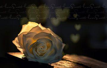 Valentijnsroos  van Ellen Driesse
