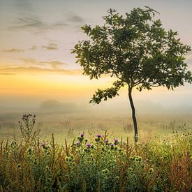 een jong boompje van jowan iven