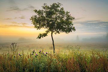 ein junger Baum von jowan iven