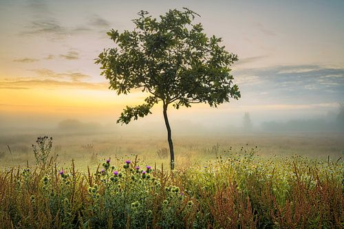 een jong boompje