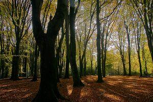 Herfst in het Speulderbos van Ad Jekel