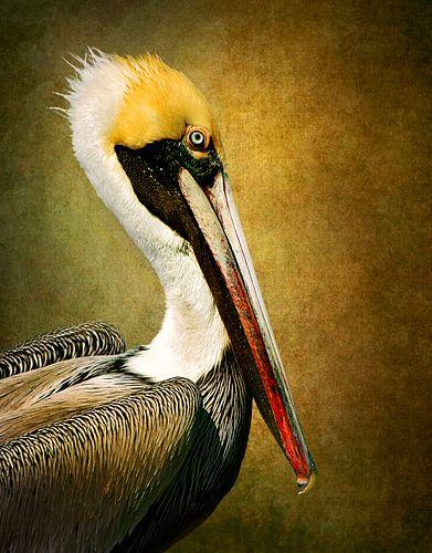 Pelikan Porträt von Diana van Tankeren