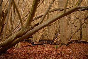 Bos op het landgoed Amelisweerd van In Utrecht