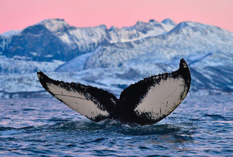 Noorwegen in de winter, prachtig!  van Koen Hoekemeijer