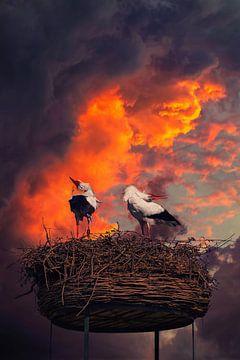 Cigognes dans un nid sur un beau fond sur Chihong