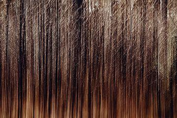 Trees in Motion van Maarten Mooijman