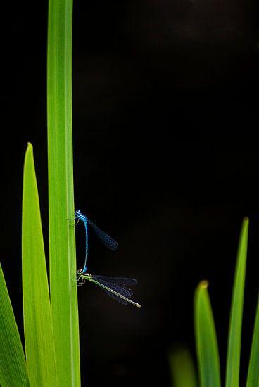 Dragonfly van Mariska Hofman