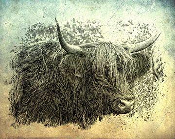 Highlander écossais sur Carla van Zomeren