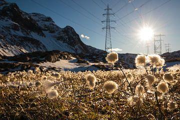 Katoengras op de Nufenenenpass - Ticino - Zwitserland van Felina Photography