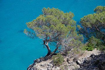 Bomen groeien aan een rots bij Sant Miquel von Natasja Claessens