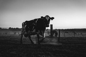 Kuh auf der Wiese von Nathan Okkerse