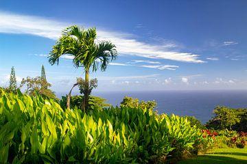 Palmboom aan zee van Sylvia de Strandjutter