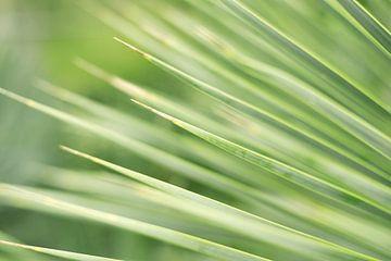 Close-up, detail van een Groen Palmboom Blad   Macro & Natuurfotografie van Diana van Neck Photography