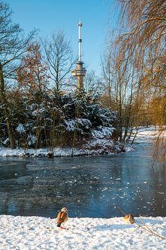 Der Euromast - Winter 3 von Nuance Beeld