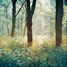 Forêt de Tenom von Lars van de Goor
