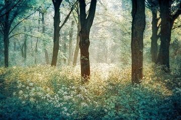 Forêt de Tenom