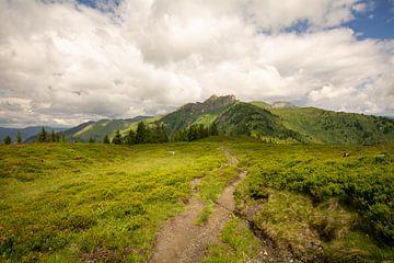 de weg naar de top van Alena Holtz