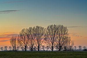 Bomen bij zonsondergang.