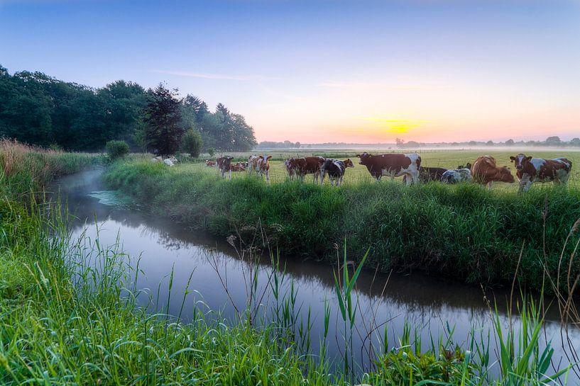 Koeien langs de Tongelreep van Joep de Groot