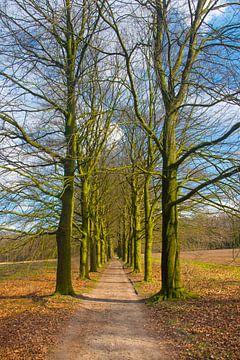 Laantje met hoge bomen von Peter Apers