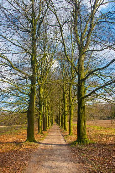 Laantje met hoge bomen